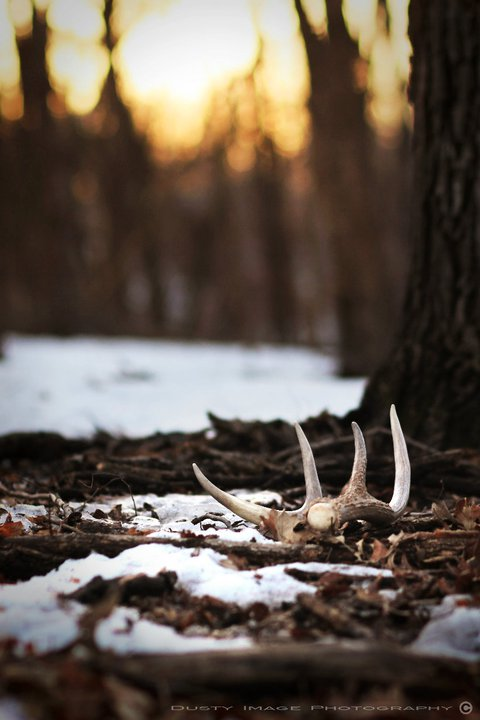 Pic-Shed Hunting