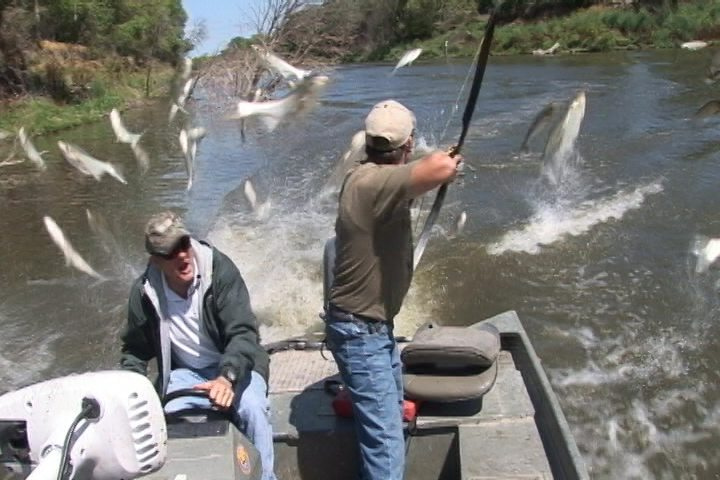 Flying Carp on the Jim River