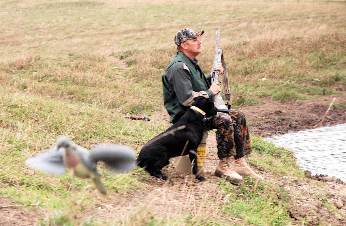 pic-dove-hunting