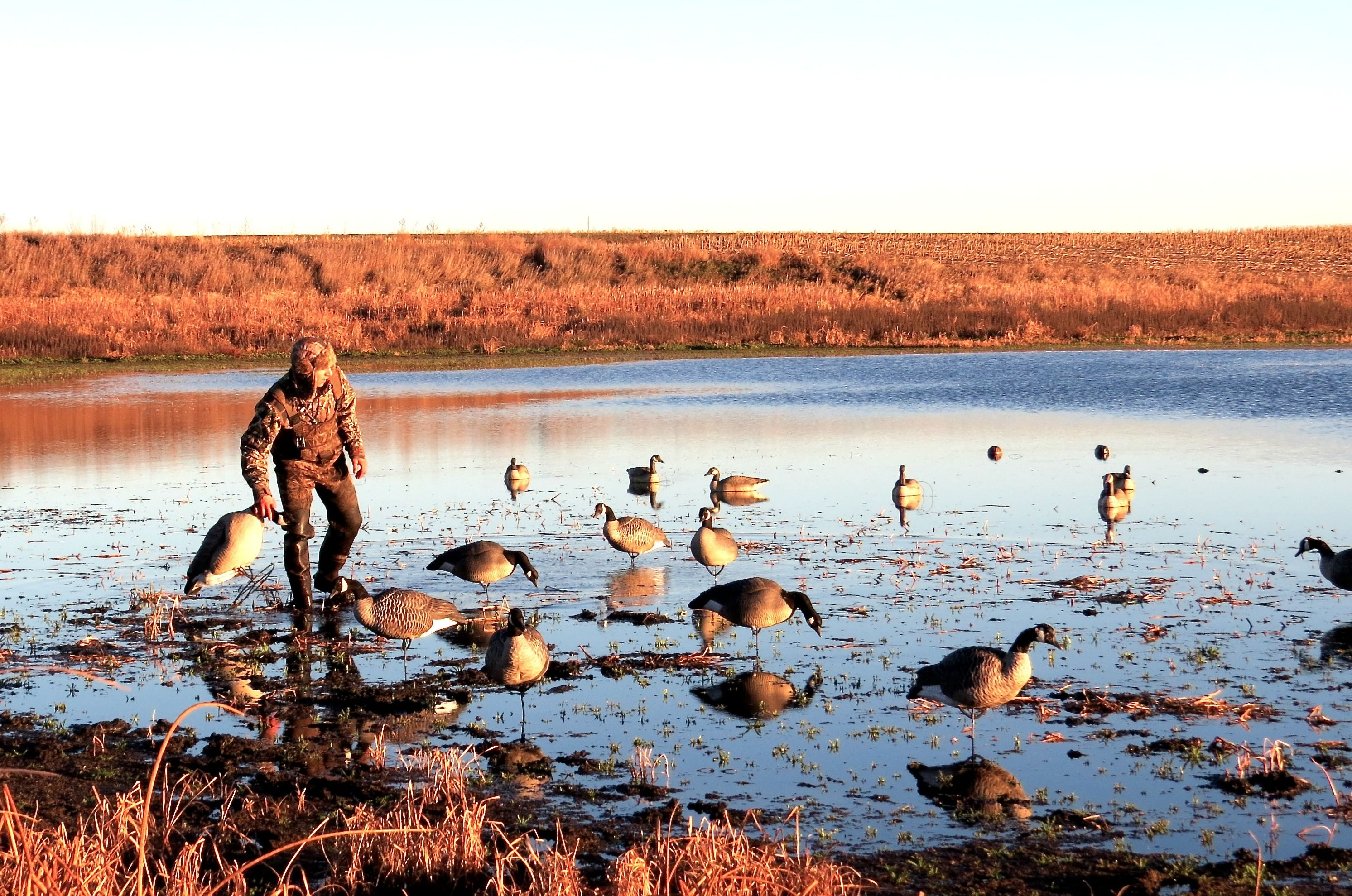 pic-brandon-in-decoys