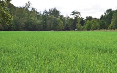 Crop Rotation for Healthy Soils & Better Food Plots