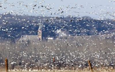 Nebraska Commissioners adopt waterfowl season recommendations