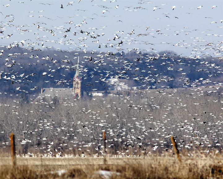 Nebraska Commissioners adopt waterfowl season recommendations