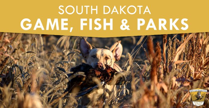 South Dakota GFP Commission Proposes Improvements to 2021 Pheasant Season