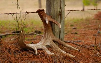 The Gamekeepers of Mossy Oak   Finding Shed Antlers: Top 3 Locations BYGERALD ALMY