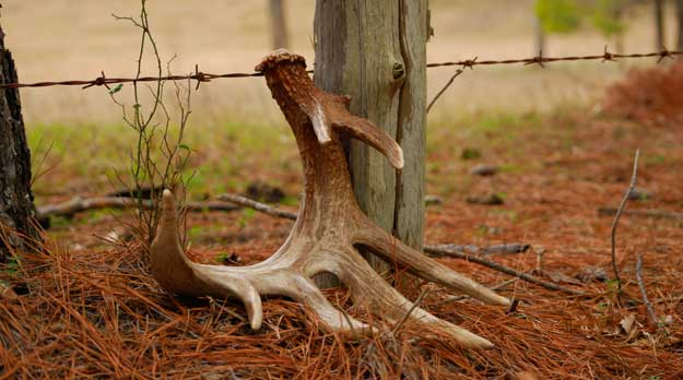 The Gamekeepers of Mossy Oak   Finding Shed Antlers: Top 3 Locations BY GERALD ALMY