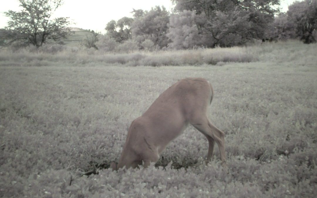 Improving your Chances for  Deer Quality and to Hold them  on your Property    By gary Howey