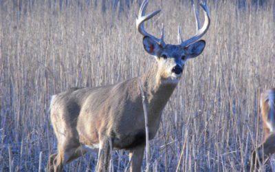 Getting High on Deer  Hunting    gary Howey